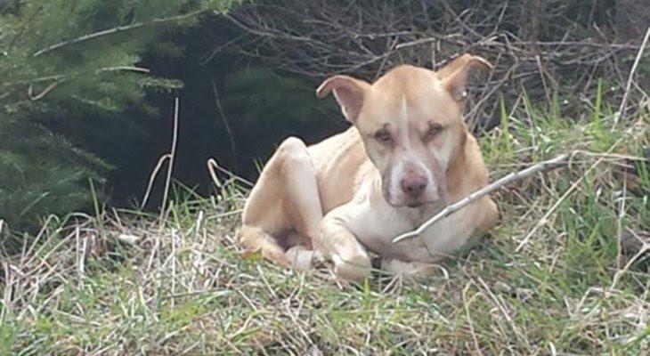 Как спасти озлобленную и одинокую бродячую собаку ...