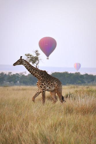 GiraffeandHotAirBalloons2
