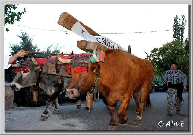 5 Llegando la Cabaña Real de Carreteros de Quintanar de la Sierra a Poza