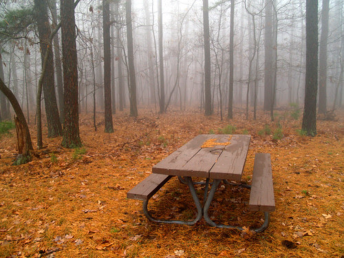Foggy picnic
