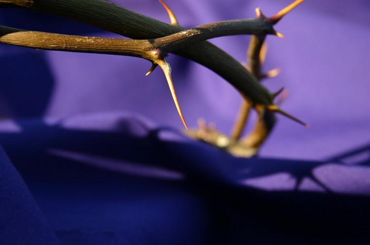 coroa-de-espinhos1
