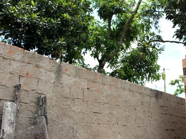 Garoto é baleado e morre ao subir em muro para pegar manga, diz polícia