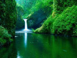 Papel de parede 'Beleza Verde'