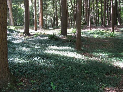 MT-woods