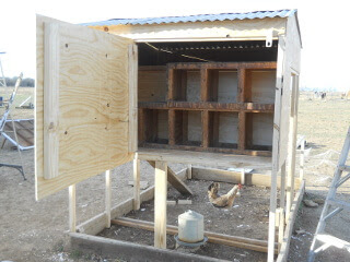 Back View of Chicken Tractor Put Back Together & Nesting Boxes