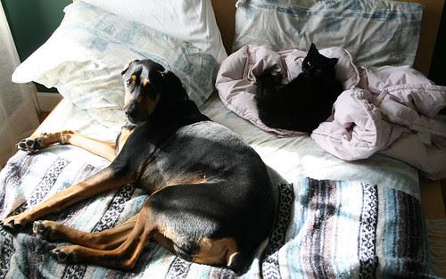 parallel pets: part 2
