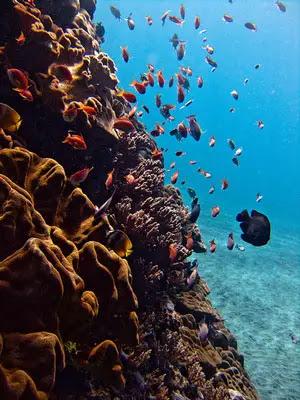 Diving Nusa Lembongan, Bali, Indonesia