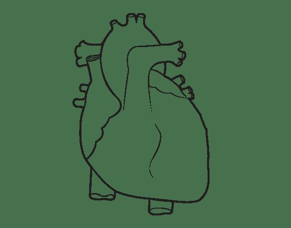 Corazones Reales Para Dibujar Wwwimagenesmycom