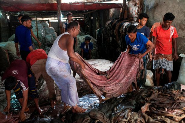 Rivers of blood flow down Dhaka streets as Eid animal