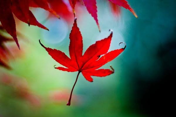http://www.digital-photography-school.com/wp-content/uploads/2006/10/autumn-photography.jpg