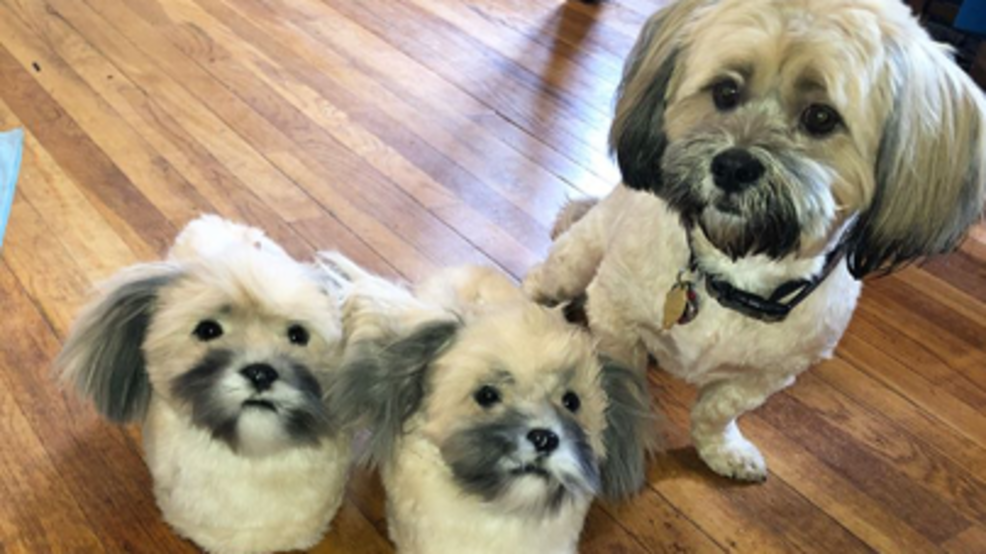 Image result for You Can Now Get A Pair Of Slippers That Look Exactly Like Your Dog
