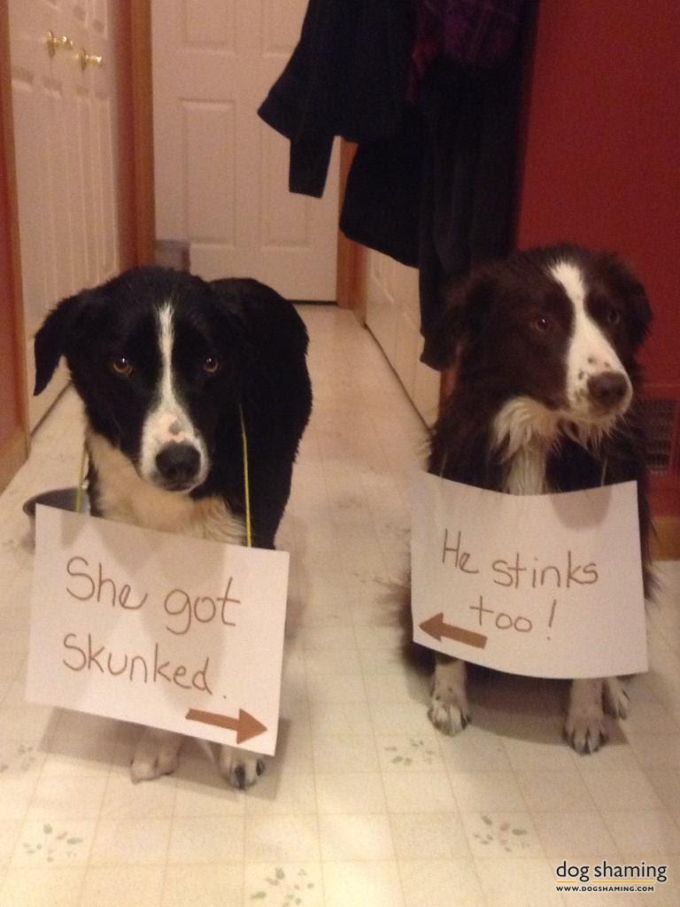 dog shaming 15 32 Hillarious Public Shaming of Dogs