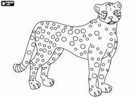 Jaguar Coloring Pages For Kids Preschool And Kindergarten