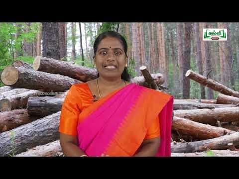 Class 9 English Unit 3 Poem On Killing A Tree Kalvi TV