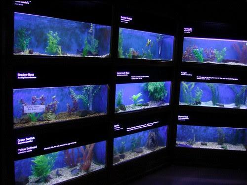"""Aquarium with separate tanks for different """"content"""""""