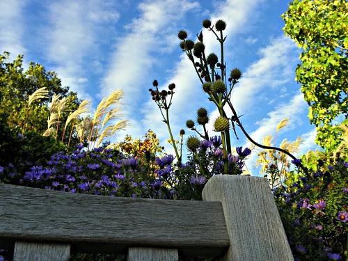 Chicago Botanic Garden (101)