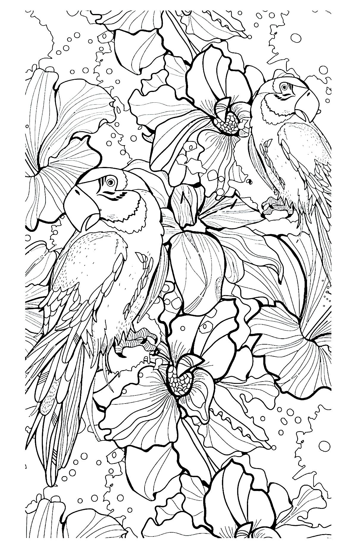Parrot difficult | Animals - Coloring pages for adults ...