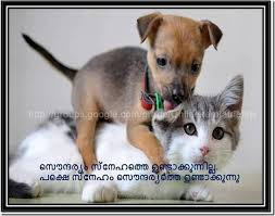Funny Friendship Quotes In Malayalam Fb Share Archives Facebook