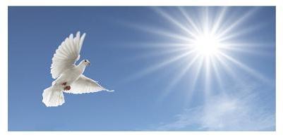 Love A Dove White Wedding Dove Release Service St Thomas London
