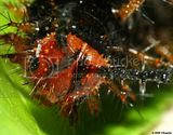 Black caterpillar headshot