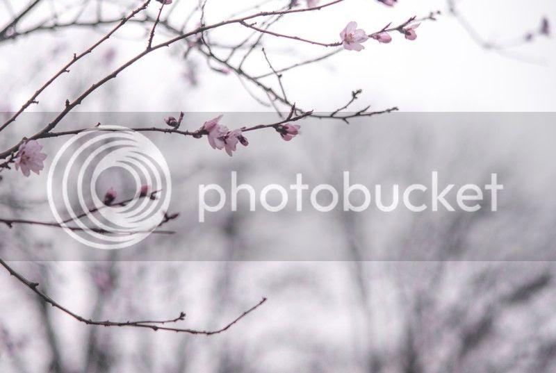 photo sp11_zps0c66d22a.jpg
