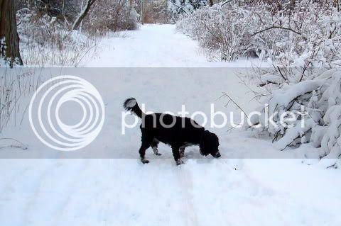 Lindsay Snow Path