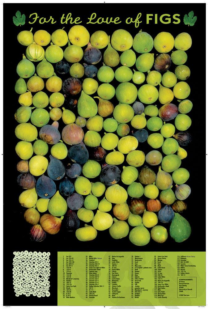 126 Varieties of Figs!