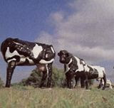 Cows: Abomination