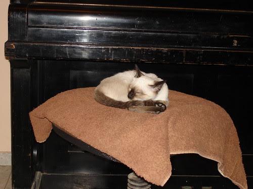 Kitten goes zzzz...