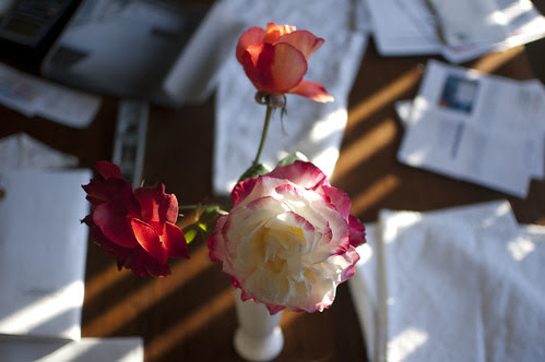 garden roses trio