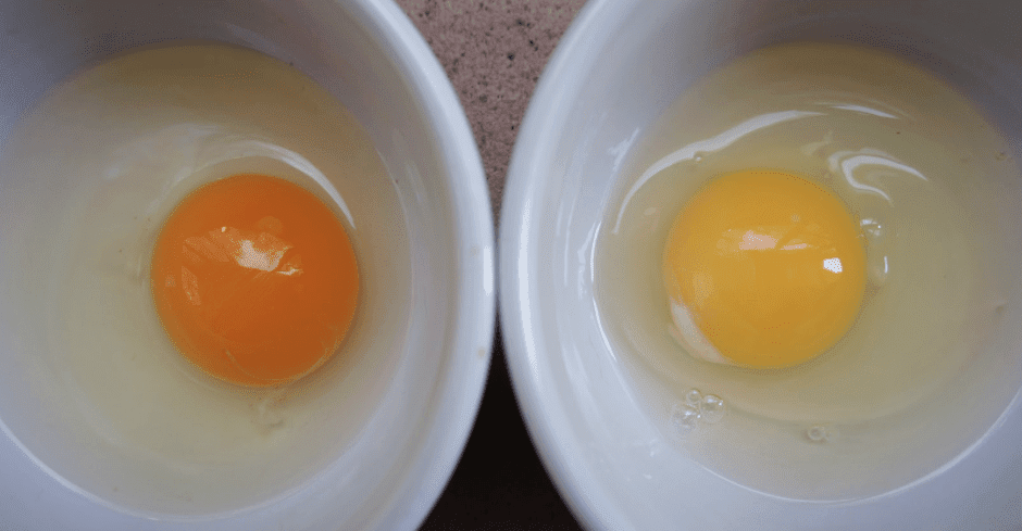 Can You Spot Which Egg Comes From a Healthy Chicken?