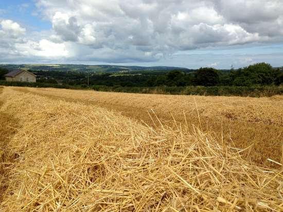 barleyharvest2015.jpg