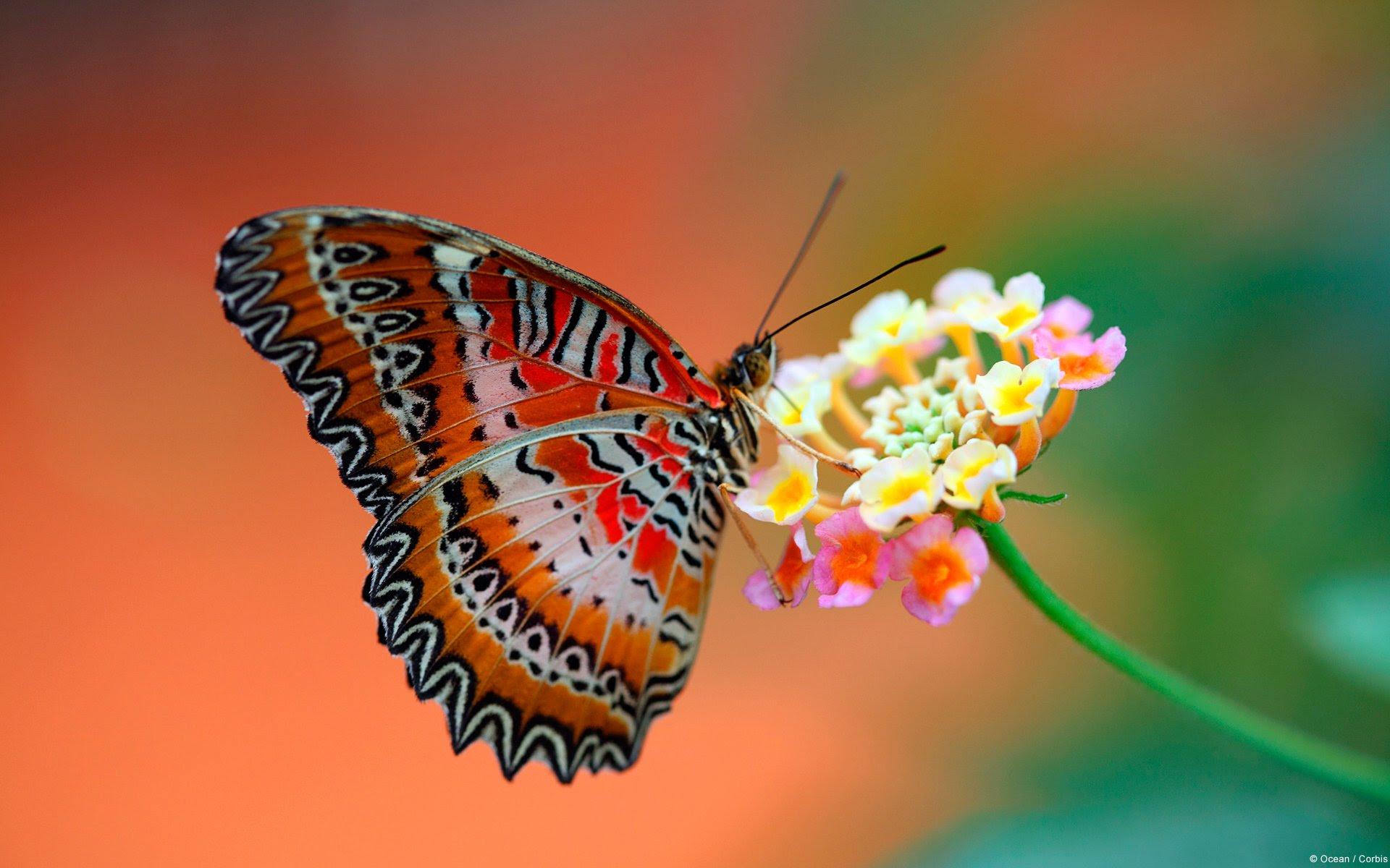 Butterfly and flower wallpaper - SF Wallpaper