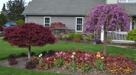 Landscaping Ideas With Japanese Maple Trees Landscape Design Ideas