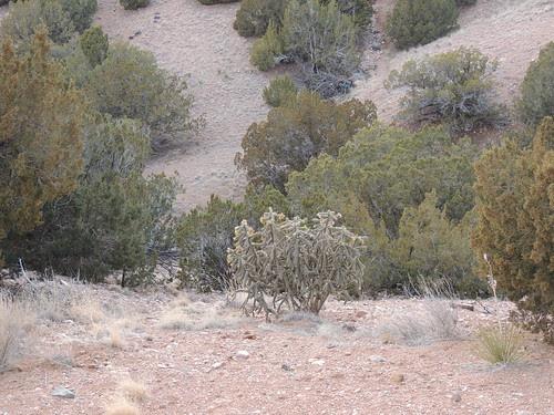 Edge of Arroyo