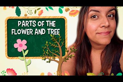 Partes De La Flor En Ingles