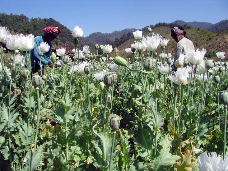 Encuesta sobre el opio