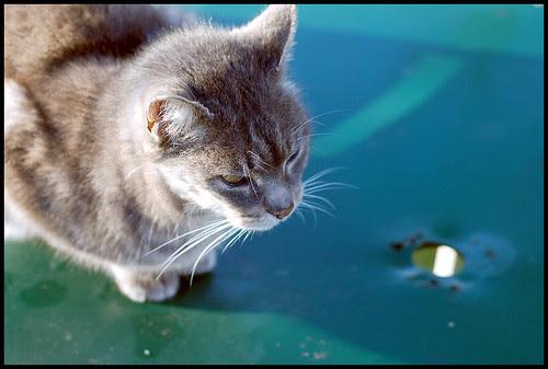 Alphonse, cat (2)