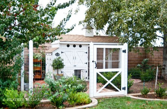 Huge, beautiful chicken coop with fenced-in yard.