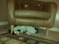 Josie asleep under the chair