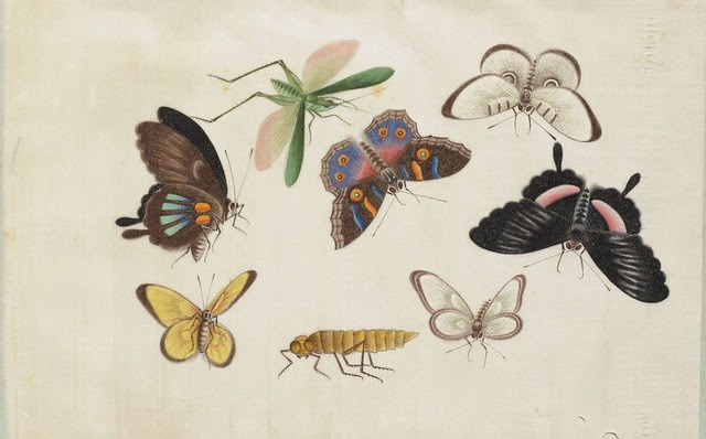 watercolour sketch of insects in butterfly album  1800s