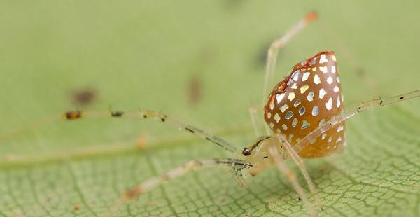 perierga.gr - Σπάνιες αράχνες-καθρέφτες!