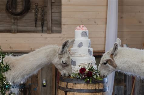 Llama Wedding at Younger Ranch   Katie Corinne Photography