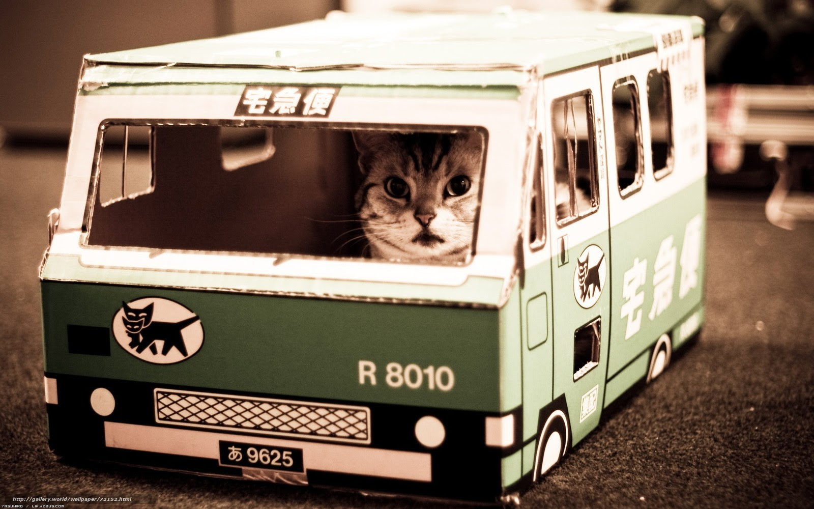 壁紙をダウンロード 猫バス あそこ デスクトップの解像度のための無料