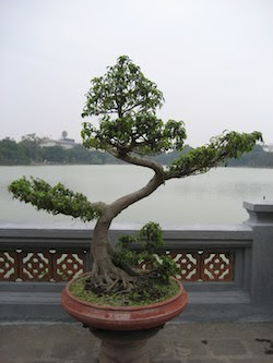 lake in vietnam with bonsai