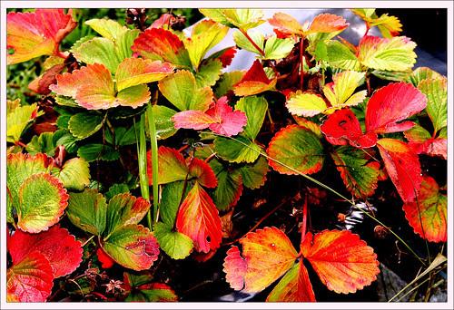colores otoñales de un verano asturiano