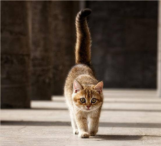 О чем Кошки знают, но не говорят ... . Фото-Мир и обо всем.