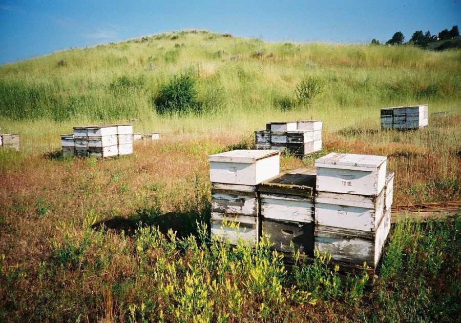 Σε απόγνωση οι μελισσοκόμοι του Έβρου - Η παγωνιά κατέστρεψε τα μελίσσια
