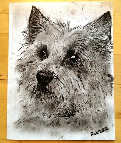 pet-portrait-charcoal-sketch