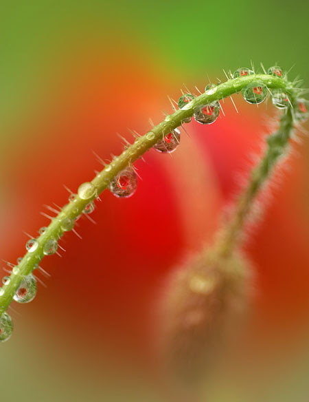 tender touch of nature